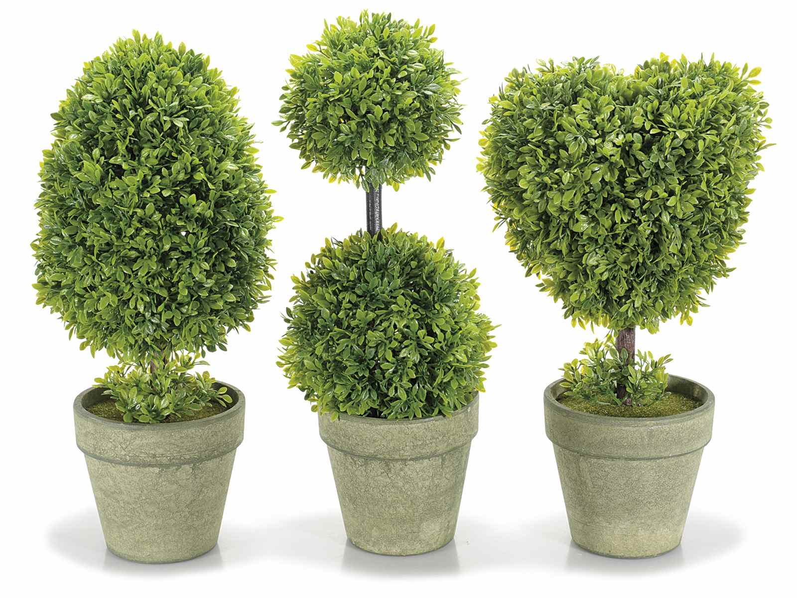 Bosso vaso 28 images 1 pianta di bosso in vaso 17cm for Bosso vaso