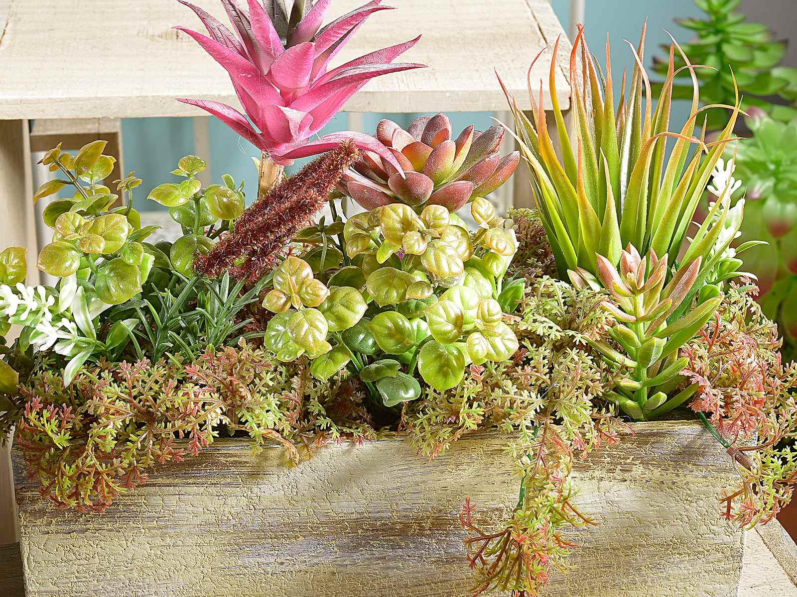 Composizioni di piante grasse kv75 pineglen - Composizione piante grasse giardino ...