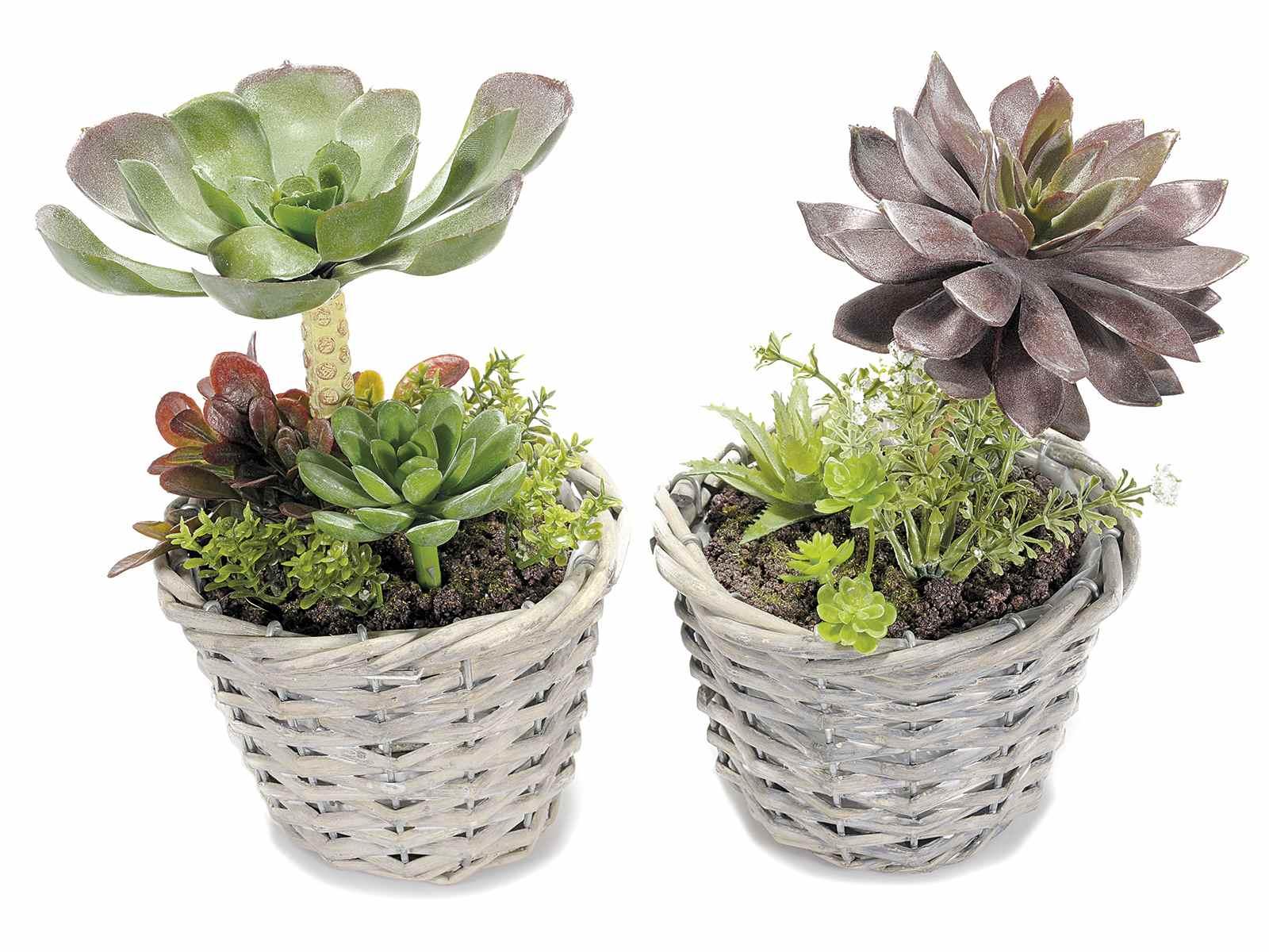piante grasse artificiali decorative in vaso di rattan 2pz