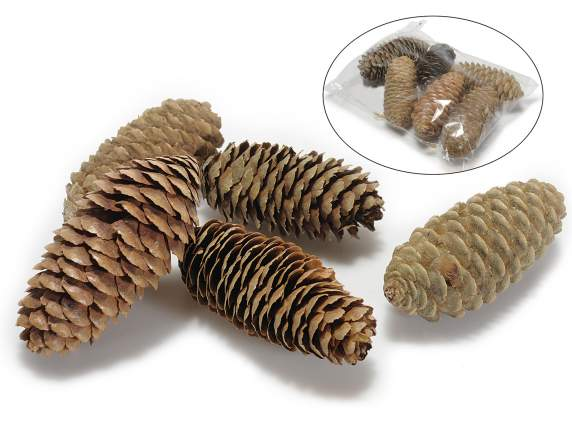 Confection of big fir cones 70 gr for decorations
