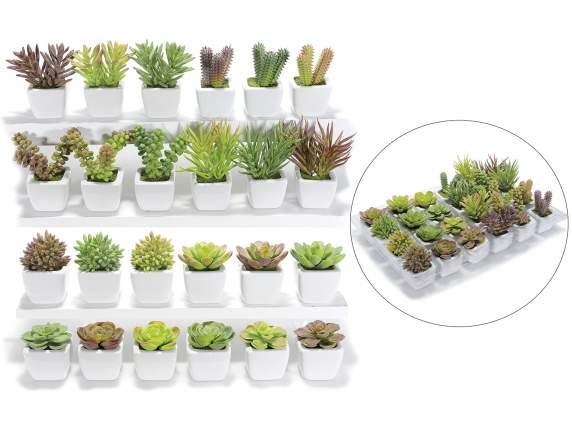 Display decorative succulent plants in pot