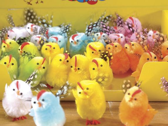 Display with 36 colored and moldable chicks with plumage