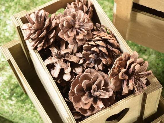 Box with 48 decorative natural fir cones